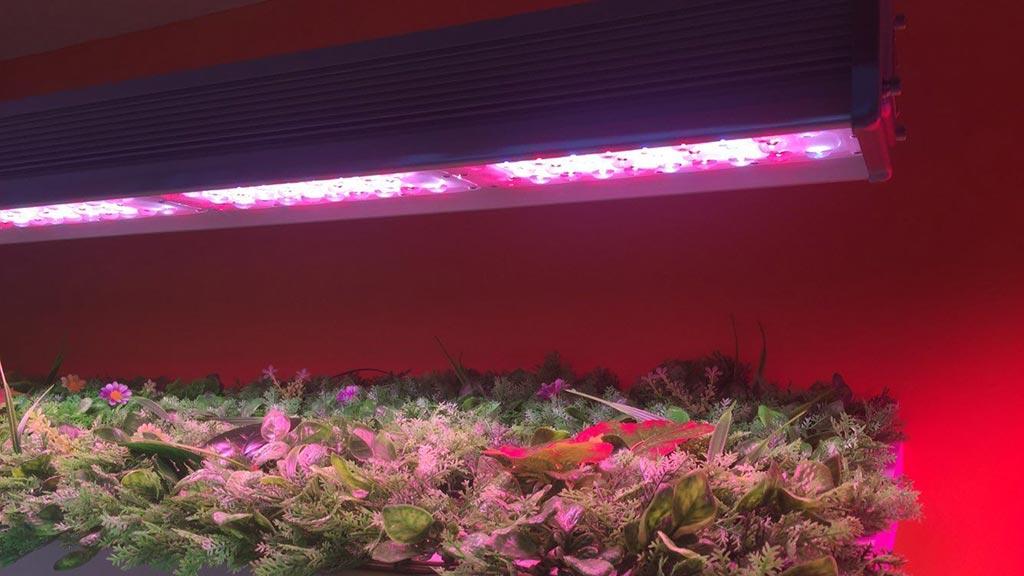 Led Grow Lighting Fair Atop Lighting