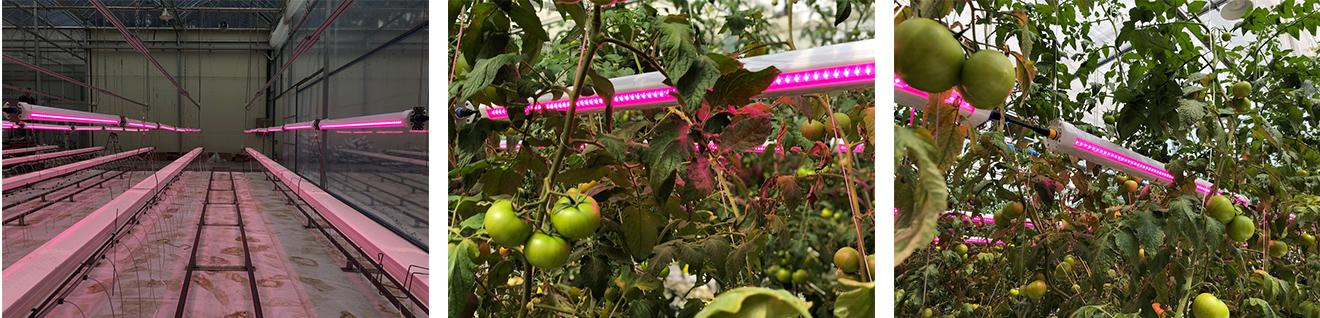 Horti Bar Led Plant Grow Light Atop Lighting